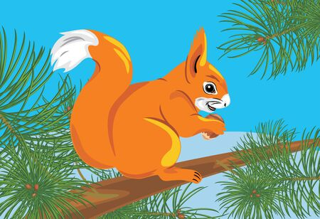 Squirrel with a nut on the spruce tree