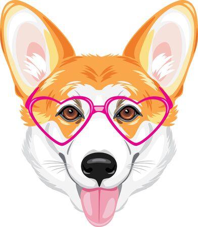 Portrait of a happy welsh corgi in pink glasses