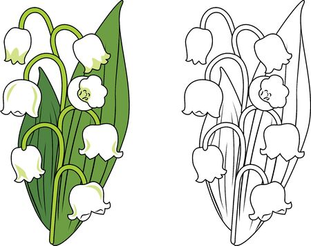 Lilies of the valley. Sample for coloring