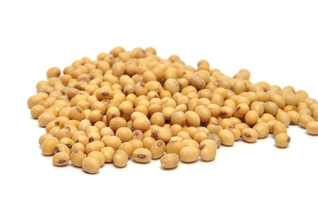 白の背景に大豆