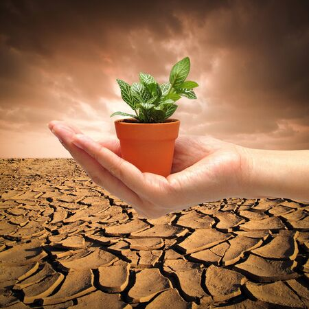 Hand with small plant on dry cracked land background Stock Photo - 12249965