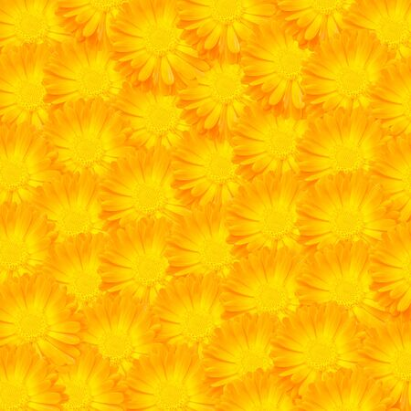 Patr�n de flores de color amarillo photo