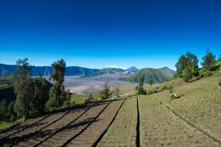 tengger: Village near Mount Bromo in Bromo Tengger Semeru National Park, East Java, Indonesia. Stock Photo