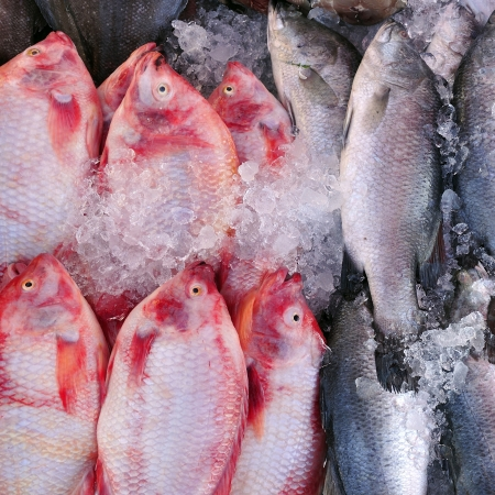 cyprinoid: fresh fish at fish market