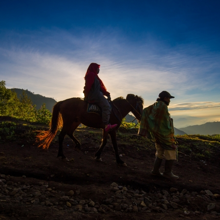 Tourists ride the horse to viewpoint on Mount Penanjakan,The best views from Mount Bromo and the surrounding volcanoes on May 04, 2013 in East Java , Indonesia