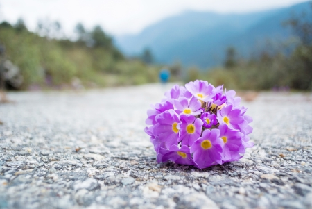 Beautiful flower drop on road photo