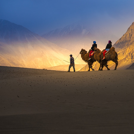 ladakh: Camel safari in Nubra Valley, Ladakh, India