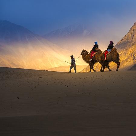 Kameel safari in Nubra Valley, Ladakh, India