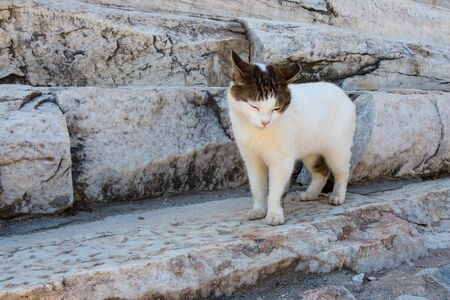 cat grooming: Cat Grooming in Warm Sunlight at Outdoor