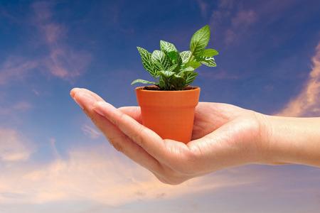 medio ambiente: Mano que sostiene una pequeña planta con el fondo del cielo naturaleza. Respetuoso del medio ambiente y el medio ambiente mundial concepto