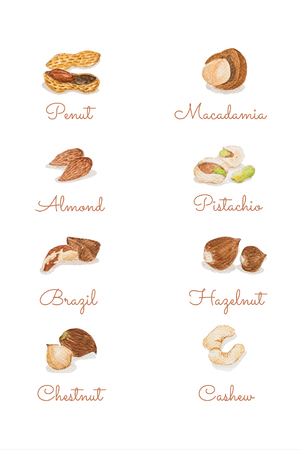 Watercolour hand painting Peanut, Macadamia, Almond, Pistachio,Brazil, Hazelnut, Chestnut and Cashew isolate on white background.