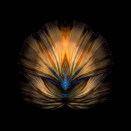 fine fish: Abstract fine art colourful fish tail free form of Betta fish or Siamese fighting fish isolated on black background Stock Photo
