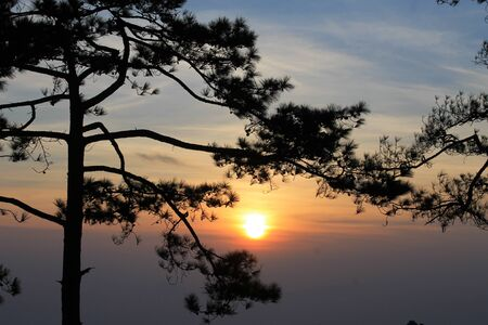 sunup: sunset behind big trees Stock Photo