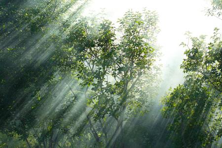木の中で煙スプレッドいっぱい太陽の光