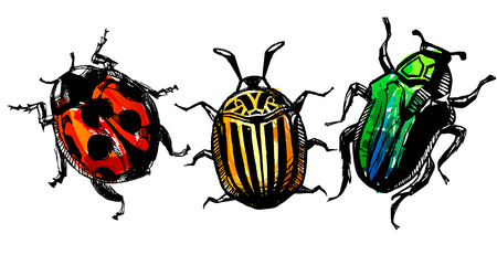 Colorful watercolor hand drawn bugs with watercolor effect shaded.
