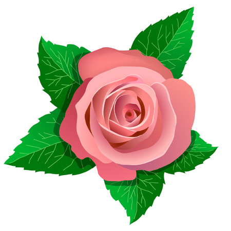 Pink rose and green leaves around. Design element for greeting cards.
