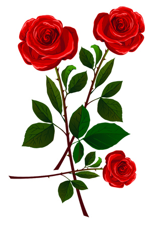 Realistic red rose collection isolated on white Illustration