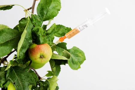 genetically engineered: apple twig with syringe Stock Photo