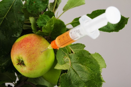 genetically engineered: apple with syringe