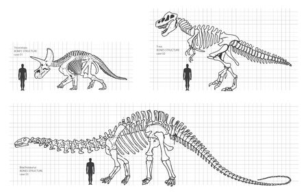 fearsome: dinosaur bone illustration Illustration
