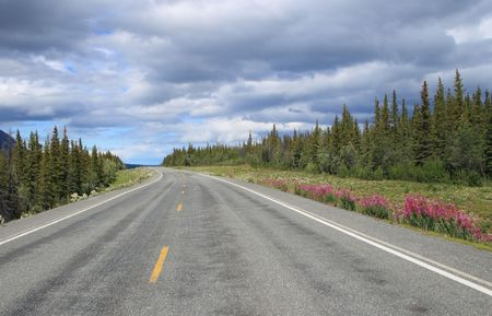 alaska scenic: scenic Richardson highway in Alaska with trees and flowers at roadside and ominous cloudy sky