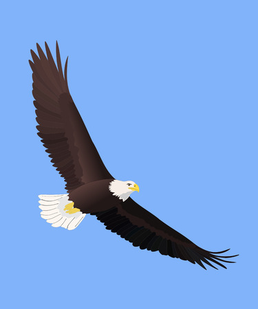 bald: Majestic Bald Eagle soaring Illustration