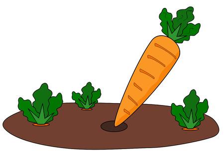 soils: cartoon illustrazione di carote fresche raccolte in orto