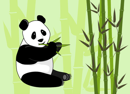 giant panda bear eating bamboo in forest Vector