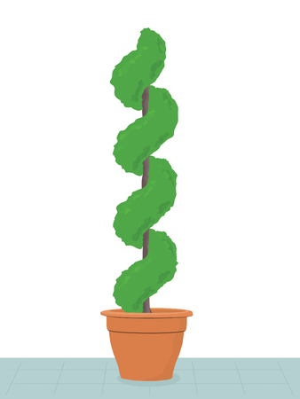 spiral topiary tree in terracotta pot on patio Vector