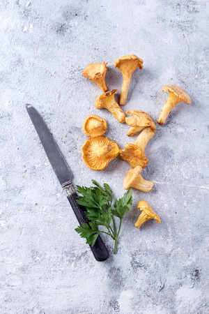 Hand picked chanterelle mushrooms with parsley and knife. Top View. Copy Space