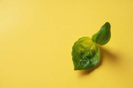 Fresh organic basil over a yellow paper background. Minimal;istic food concept. Pop Art. Top View. Flat Lay Standard-Bild