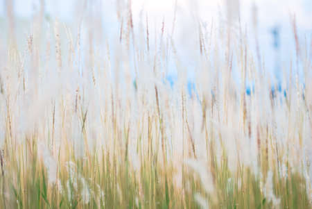Vintage flower grass background blur like dream photo