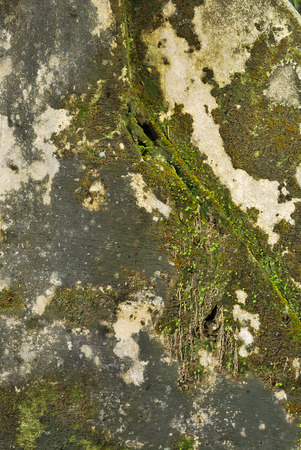 Texture of old concrete grunge wall covered with lichen moss mold as a background photo