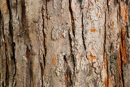 tree bark closeup usable as texture or background photo