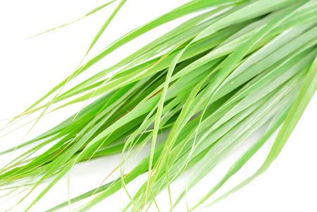 Lemon grass leaf Standard-Bild
