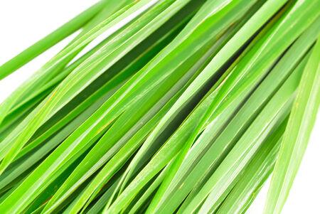 Lemon grass leaf photo