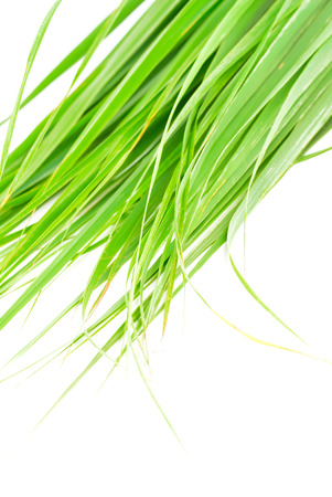 Lemon grass leaf Stock Photo