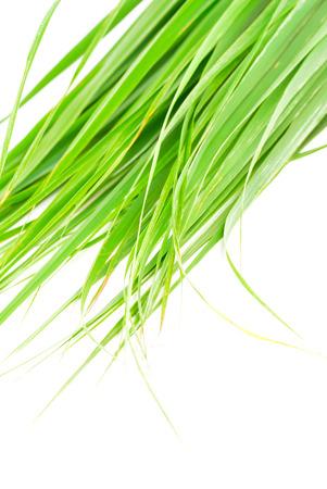 Lemon grass leaf Stock Photo - 29626195
