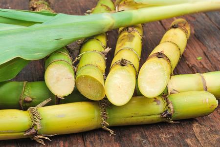 canne: Close up canna da zucchero