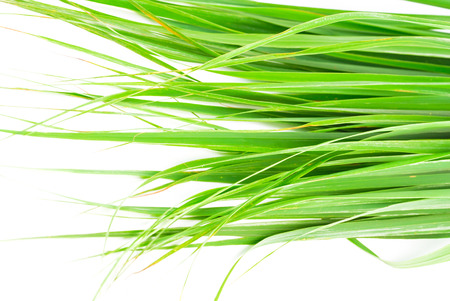 Lemon grass leaf photo