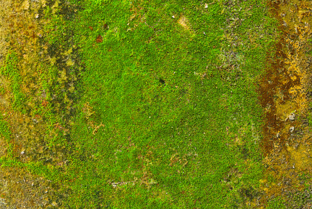 Moss on wall texture background. photo
