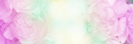 sweet color carnation in soft and blur style for background