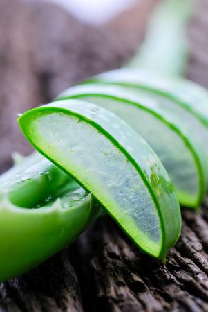 Aloe vera fresh leaf plant .