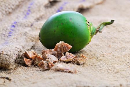 linn: Betel nut fresh betel palm, Areca palm (Areca catechu Linn.) Stock Photo