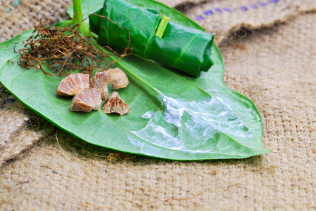 Betel leaf edible eating culture of Asia