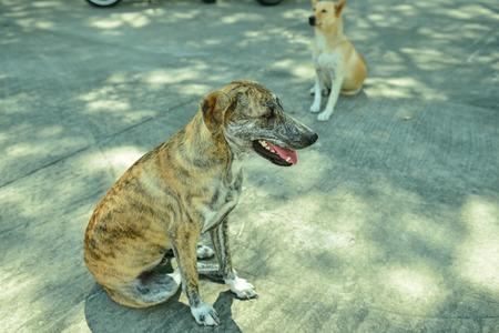 cur: Homeless stray dog on street