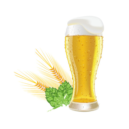drop cap: Glass fresh beer with cap of foam and water drop barley and hops isolated on white background vector illustration