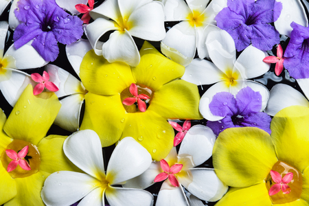 fragrant: beautiful flowers in the water spa