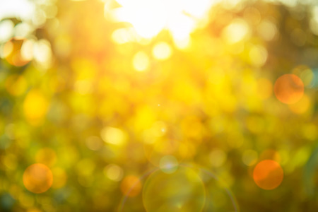 Warm yellow golden color tone blurred nature background of a view looking up through the orange foliage of a tree against the sky facing sun flare and bokeh: Blurry natural greenery bokeh