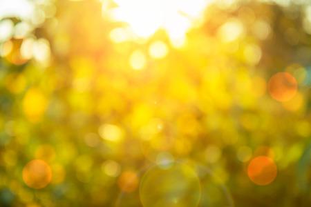 Warme gele gouden kleurtoon onscherpe achtergrond van de natuur van het oog omhoog door de oranje bladeren van een boom tegen de hemel geconfronteerd met zon flare en bokeh: Onscherpe natuurlijke groen bokeh